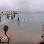 Attaque de chien sur le Triathlon de Cannes   YouTube
